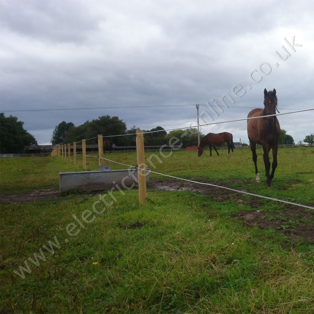 Thoroughbred looking at Equiline Fence