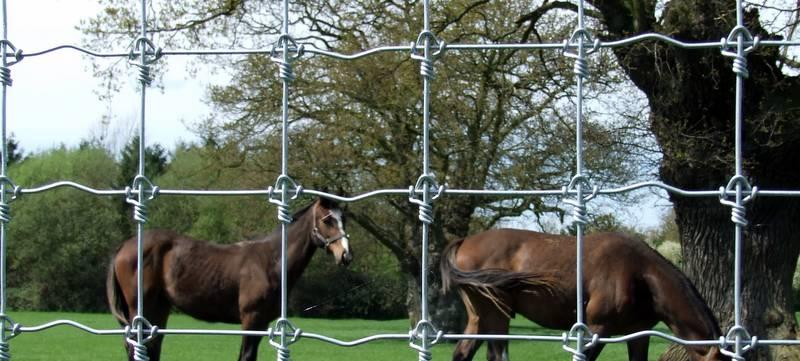 Premium Horse Fence