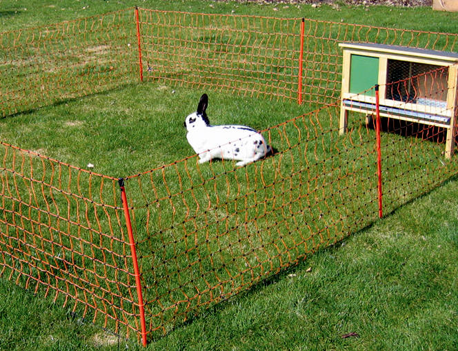Experience with electric fencing for rabbits (rabbits forum